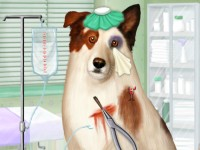 Doctor For Dog With Blog