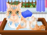 Kitty Groomer